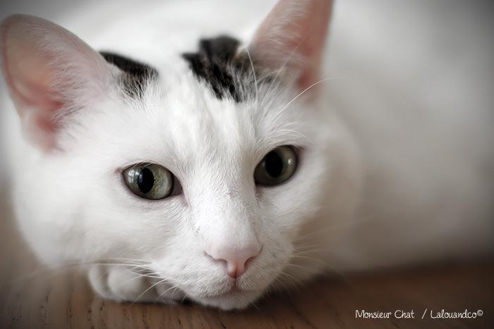 monsieur-chat-rennes-lalouandco