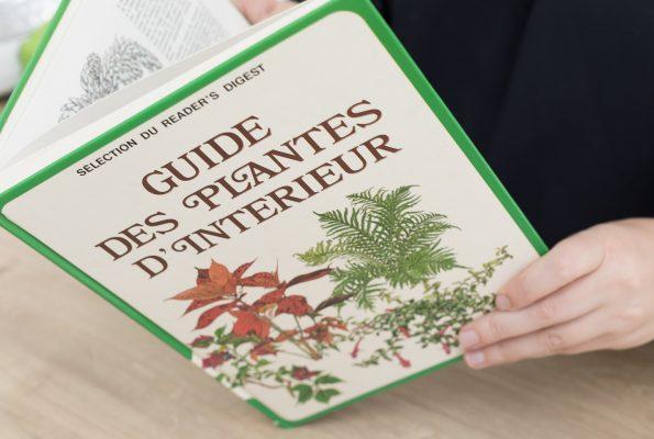 L'indispensable guide des plantes d'intérieur