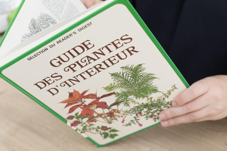 L 39 indispensable guide des plantes d 39 int rieur lalouandco for Prendre soin de son enfant interieur
