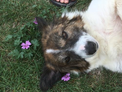 La Ferme des Rescapés sauve les animaux en détresse